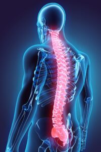 3D illustration of Spine - Part of Human Organic.